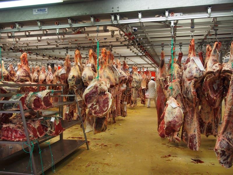 Смертная казнь через повешение мяса коровы скотобойни стоковая фотография
