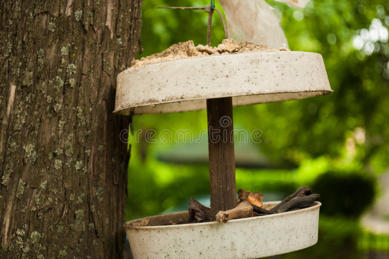 Смертная казнь через повешение фидера птицы от дерева стоковые изображения rf