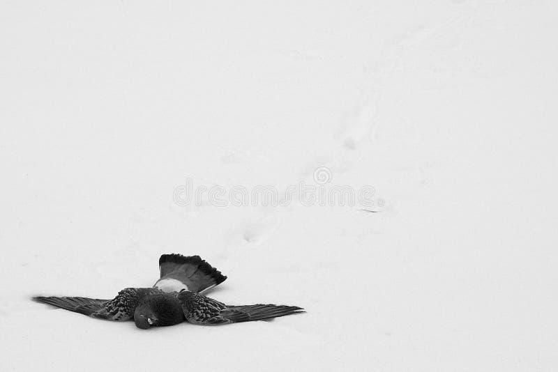 смерть, котор замерли к Стоковые Фотографии RF