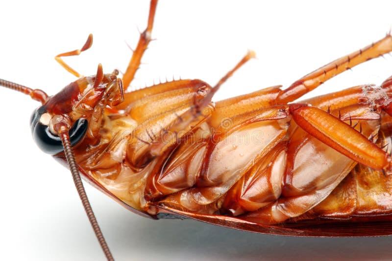 смерть таракана стоковое изображение