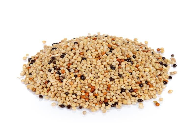 Смесь семени изолированная на белой предпосылке Корм для домашних животных для птиц стоковое фото rf
