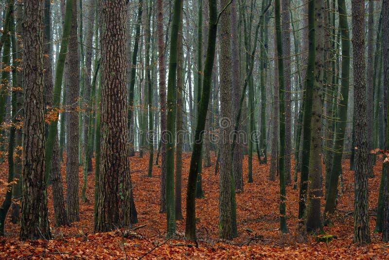 Смешанная пуща осени. стоковые фотографии rf