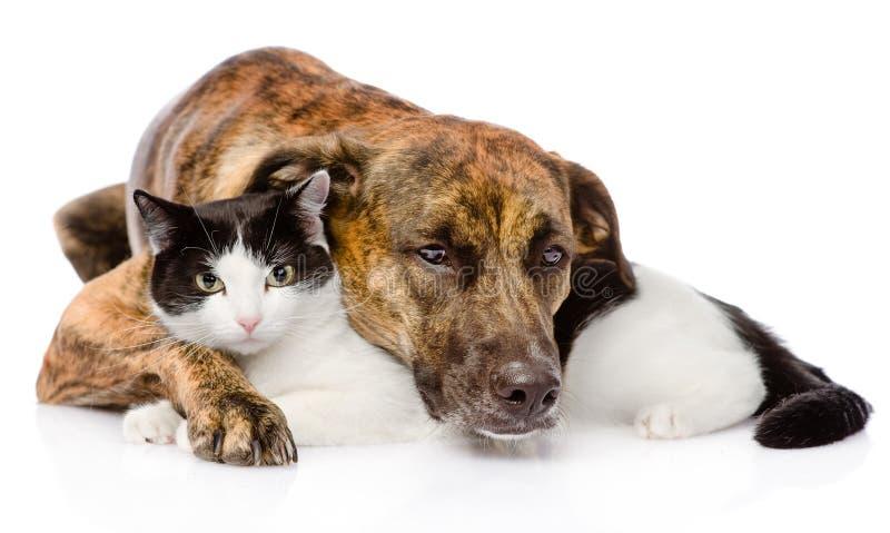 Смешанная собака и кошка породы лежа совместно Изолировано ...