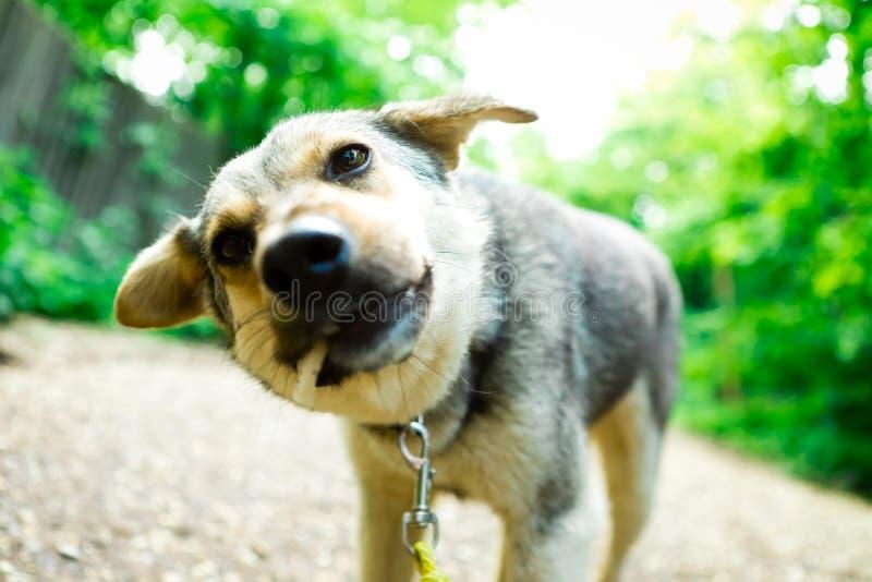 Смешанная собака породы есть titbit, детали сдерживать стоковое фото