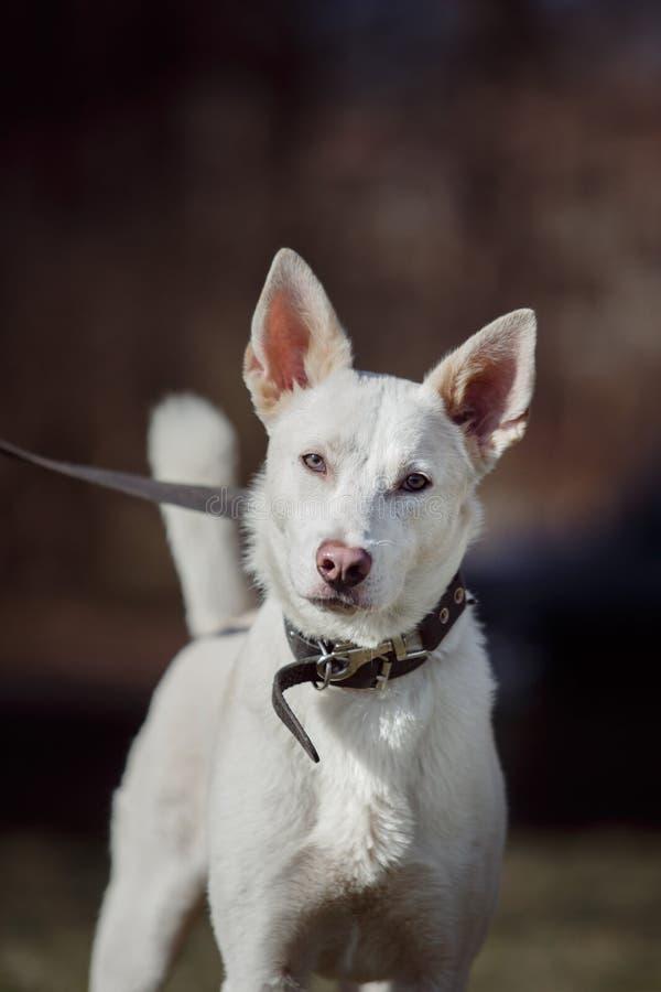 Смешанная собака породы в природе стоковые изображения