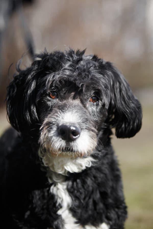 Смешанная собака породы в природе стоковое изображение