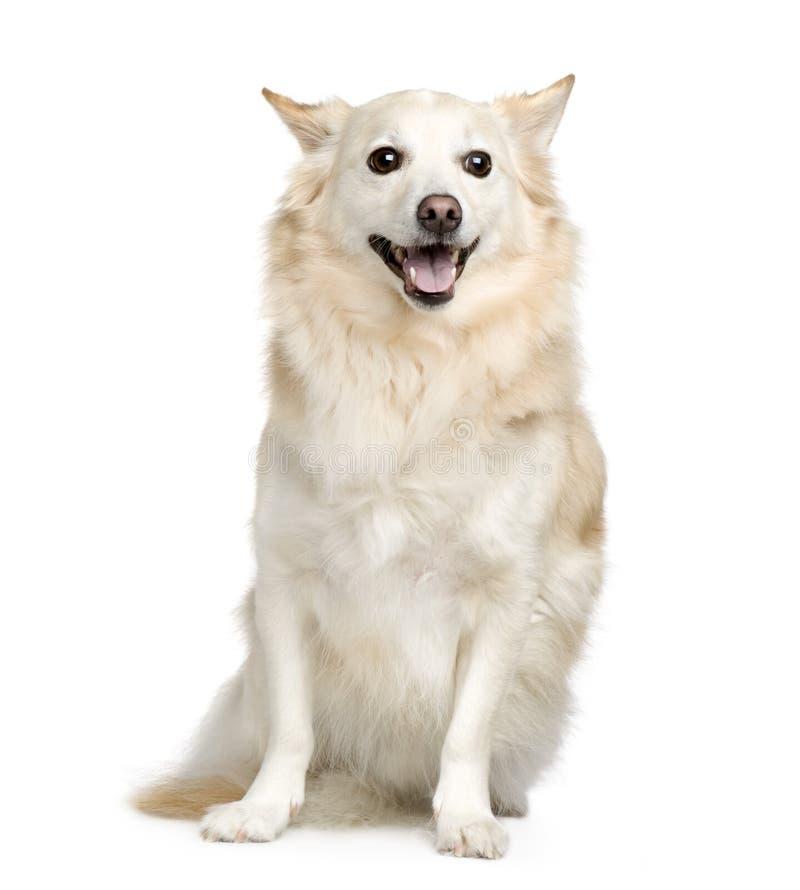 Download смешанная собака breed стоковое изображение. изображение насчитывающей задыхаться - 6852049