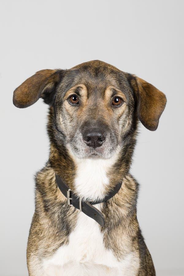 смешанная собака breed стоковое фото
