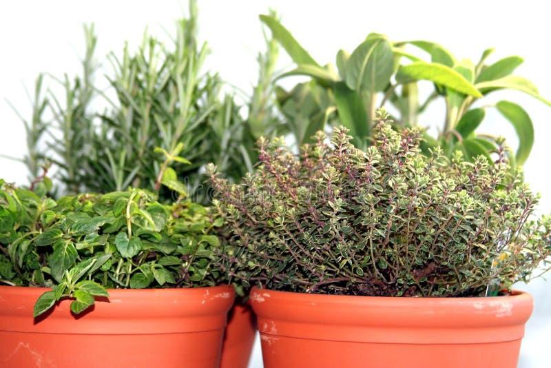 Download смешанные травы стоковое фото. изображение насчитывающей шалфей - 483338
