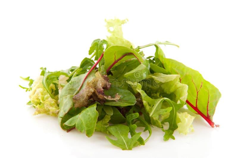 смешанный салат разнообразности стоковое фото