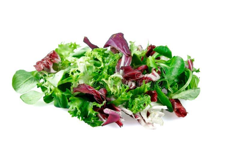 Смешанный салат выходит салат frisee, radicchio и овечки белизна изолированная предпосылкой стоковое изображение