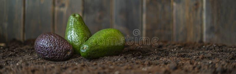 Смешивание авокадоа на положении f темной земли почвы плоском стоковое фото