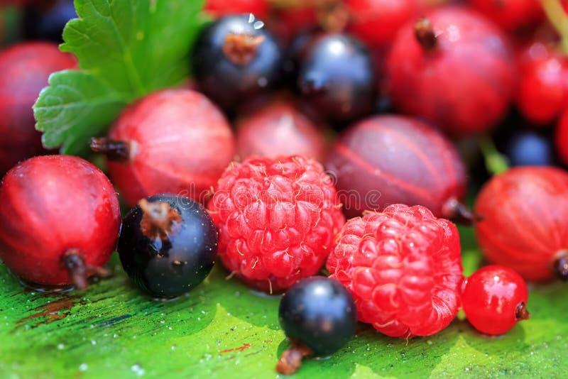 Смешивание различных ягод лета на деревянной предпосылке стоковая фотография rf