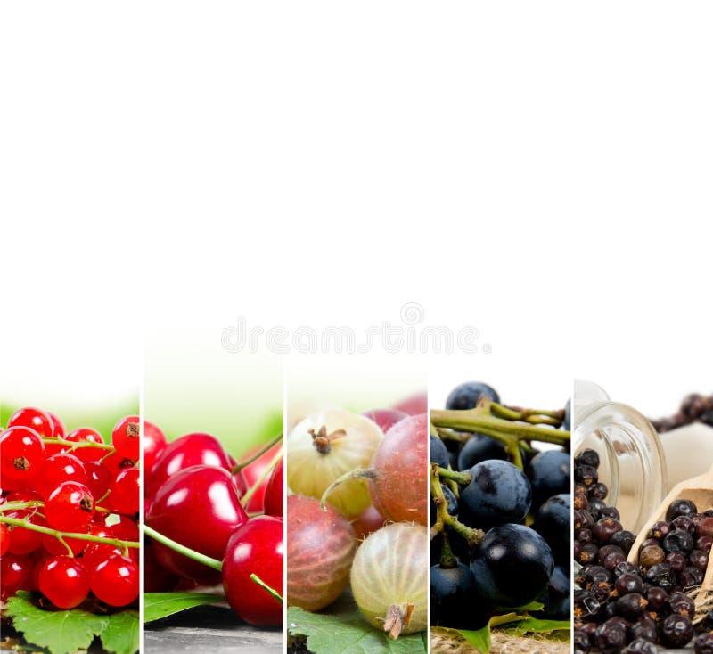 Смешивание ягоды стоковое изображение rf