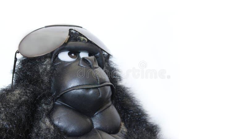 Смешная горилла с солнечными очками стоковое фото rf