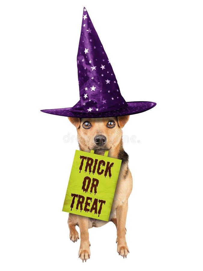 Смешная изолированная сумка три мяча подряд или обслуживания ведьмы собаки хеллоуина стоковая фотография rf
