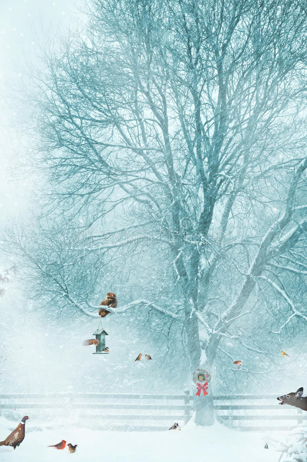 Смешная предпосылка рождественской открытки. стоковая фотография rf