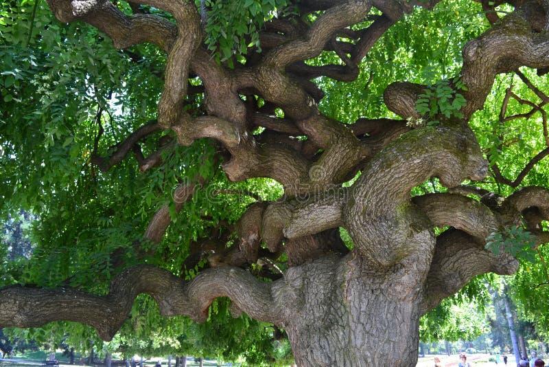 Смешное дерево в парке города стоковое изображение rf