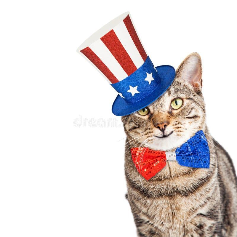 Смешной американский патриотический кот стоковое изображение