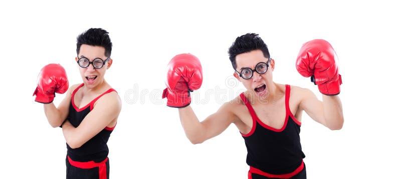 Смешной боксер изолированный на белой предпосылке стоковая фотография