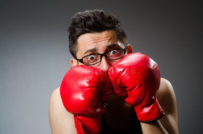 Смешной боксер с красными перчатками против стоковая фотография rf