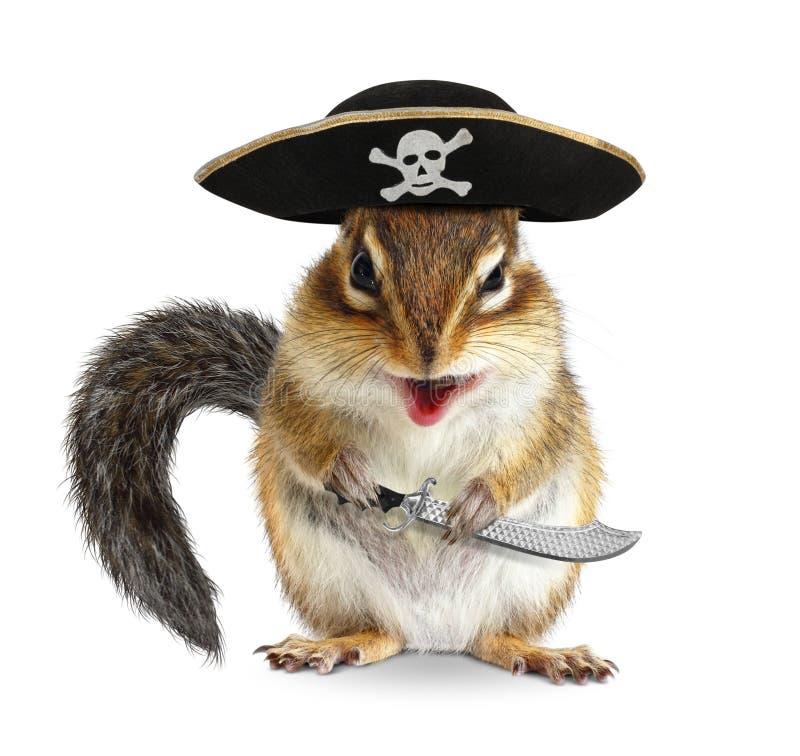 Смешной животный пират, Сибирский бурундук с шляпой флибустьера и сабля стоковые изображения rf