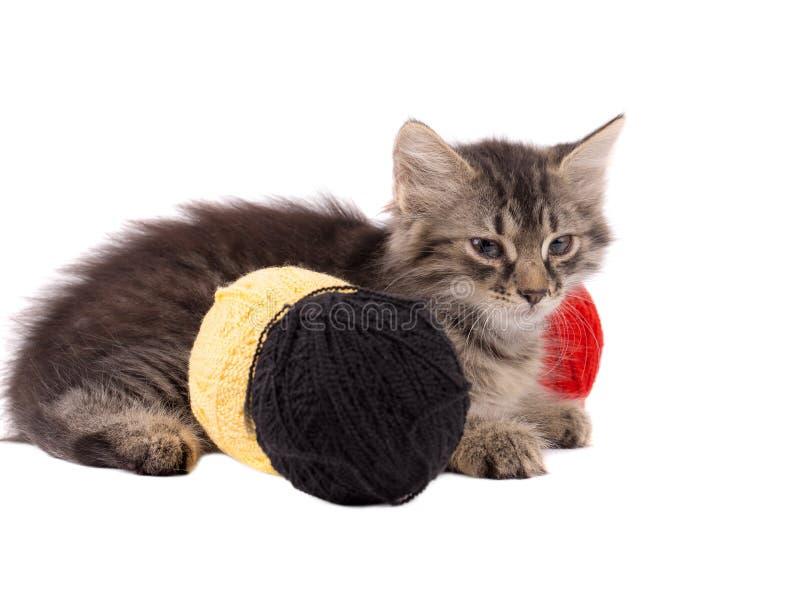 Смешной коричневый котенок и шарики потока стоковые изображения rf
