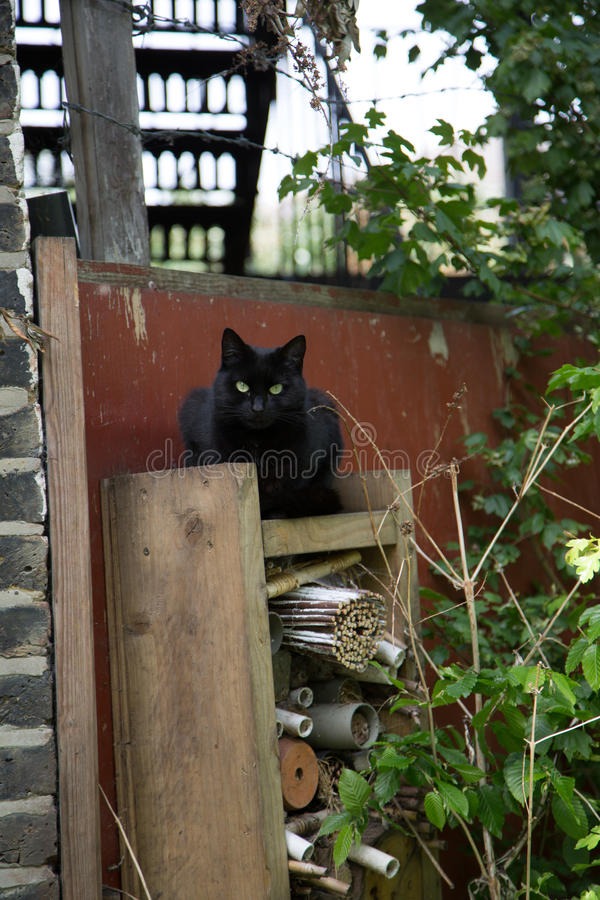 Смешной кот держит коттедж ведьмы bevore вахты стоковые изображения