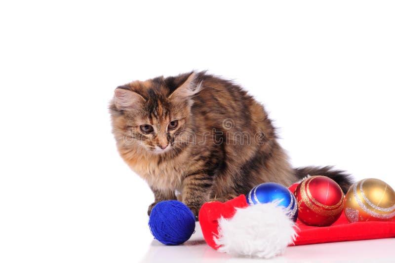 смешной кот с рождественскими игрушками, изолированными на белом стоковые изображения
