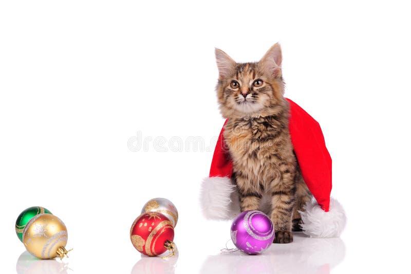 смешной кот с рождественскими игрушками, изолированными на белом стоковое фото