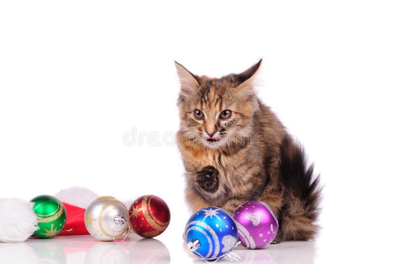 смешной кот с рождественскими игрушками, изолированными на белом стоковое изображение