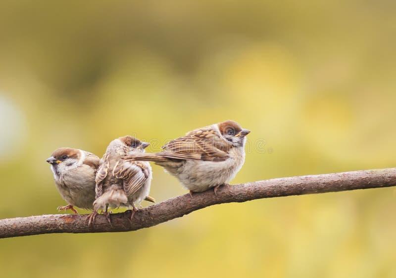 Смешной маленький цыпленок сидя в родителях дерева ждать стоковое фото rf