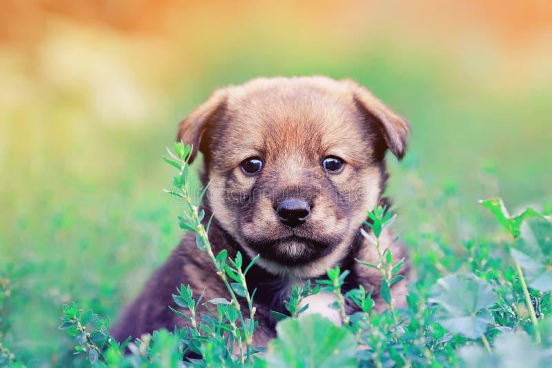Смешной маленький щенок peeking из травы стоковое изображение rf