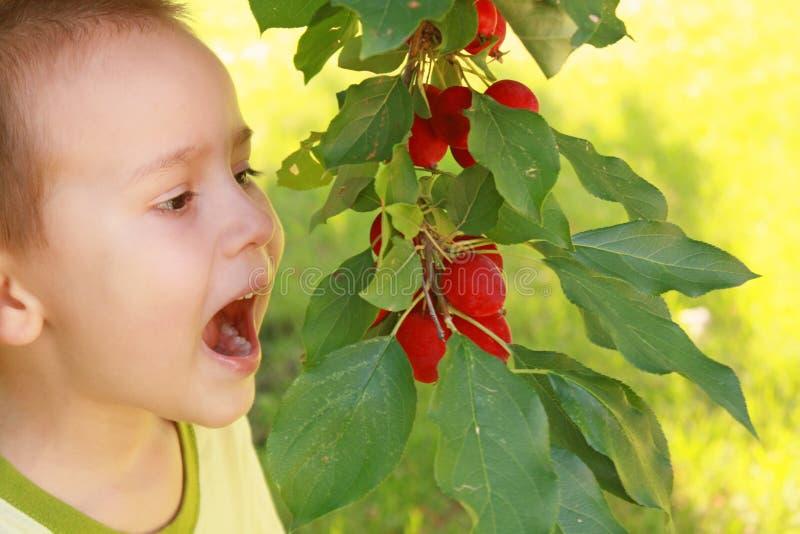 Смешной мальчик и яблоки стоковые фотографии rf