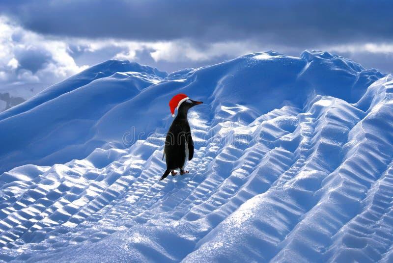 Смешной пингвин Санты стоковые фотографии rf