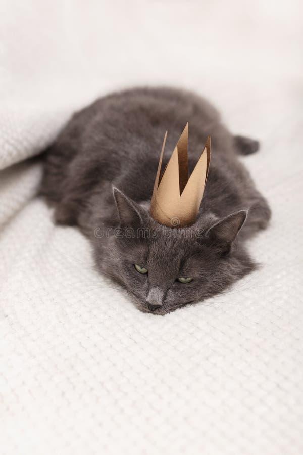 Смешной серый пушистый кот лежит на софе с золотой кроной на его голове стоковое изображение rf
