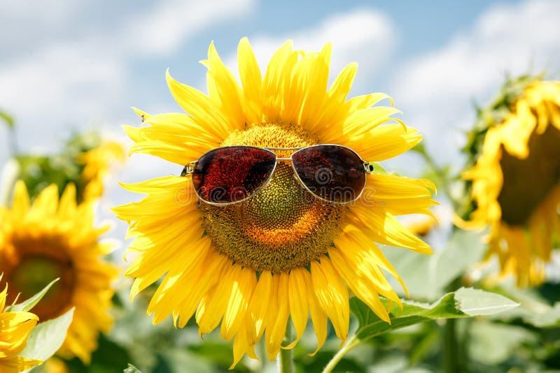 Смешной солнцецвет с солнечными очками стоковая фотография