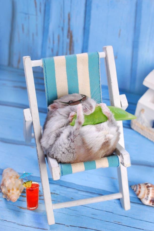 Смешной хомяк ослабляя на летних отпусках стоковое фото rf