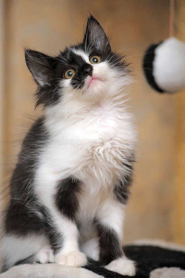Смешной черно-белый котенок стоковое фото