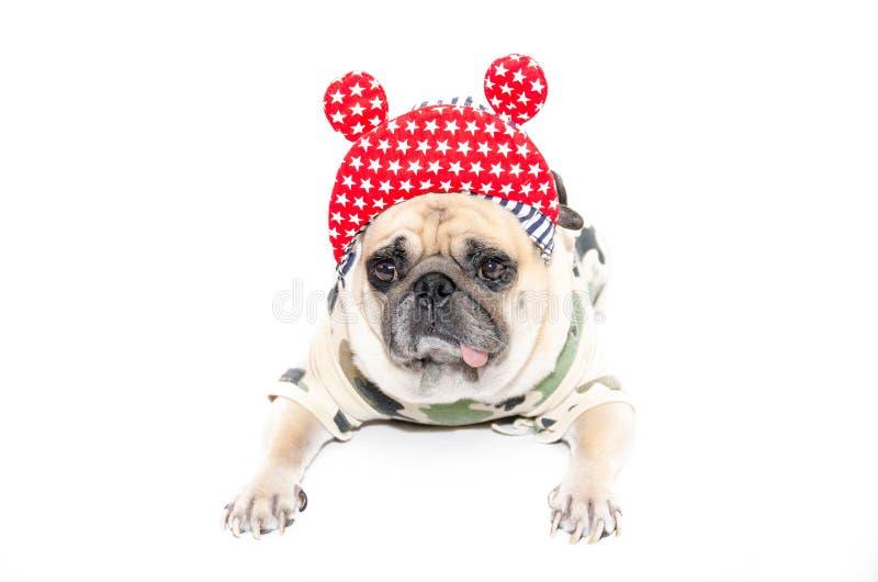 Смешной щенок собаки мопса с тазобедренными шляпой хмеля и костюмом солдата Isolat стоковое изображение