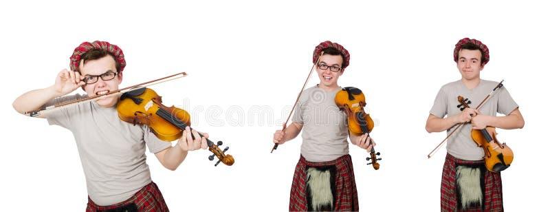 Смешной scotsman с скрипкой на белизне стоковое изображение rf