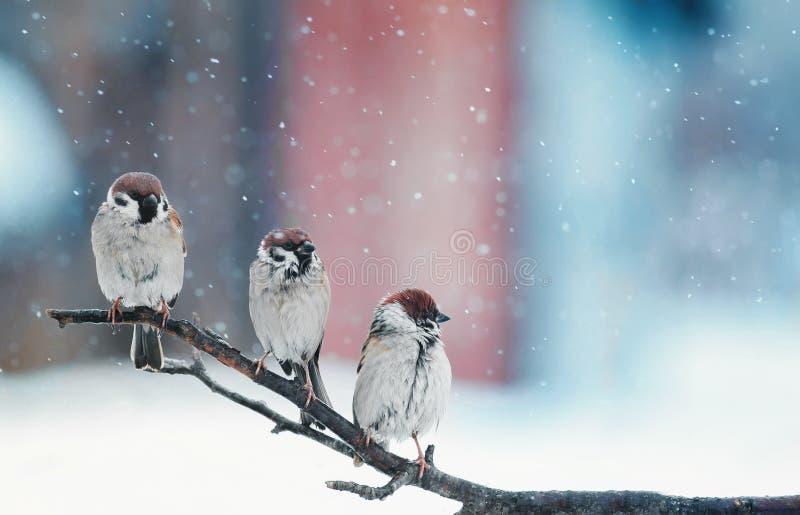Смешные маленькие птицы сидя на ветви в снеге на рождестве стоковое изображение rf