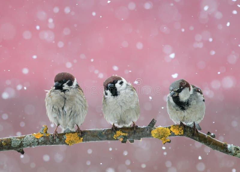 Смешные маленькие птицы сидя на ветви в падая снеге в стоковое изображение rf