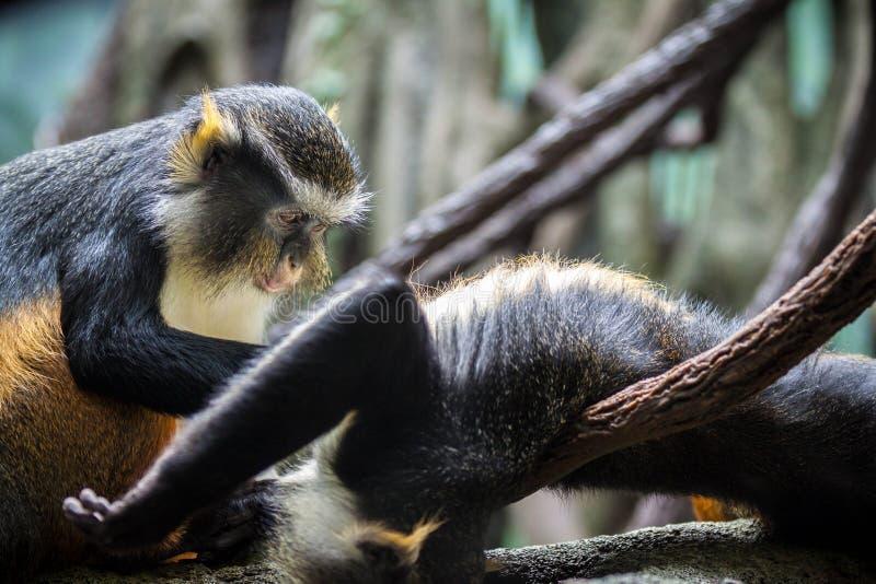 Смешные обезьяны стоковая фотография