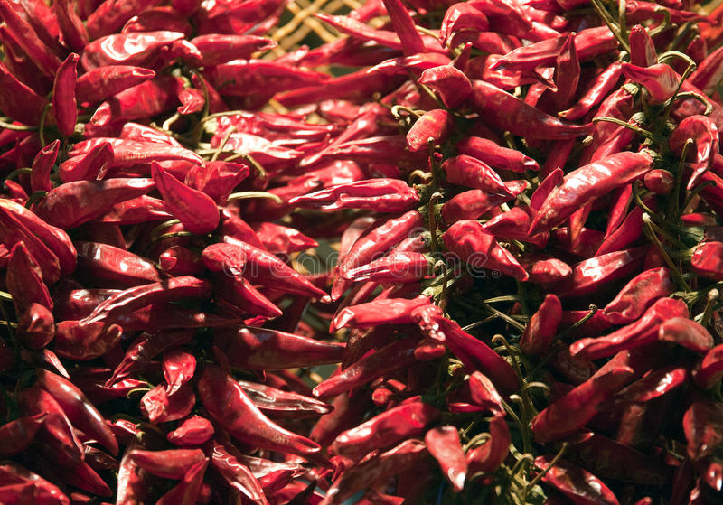 Смешные опарникы замаринованных овощей на городке выходят Budapes вышед на рынок на рынок Венгрию стоковое фото