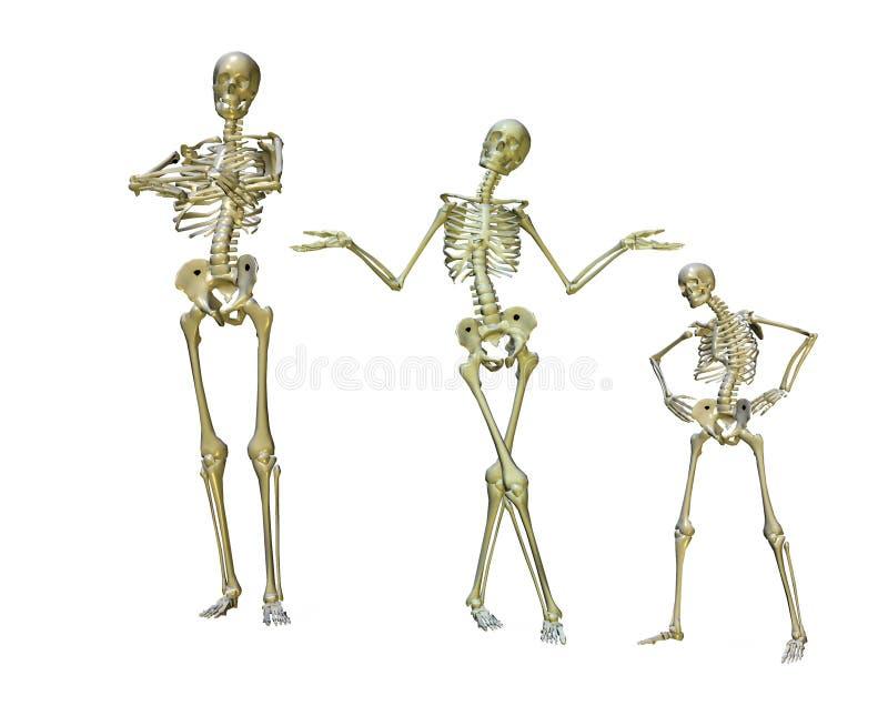 смешные скелеты иллюстрация вектора