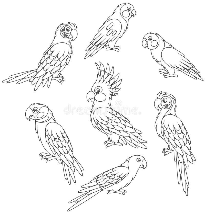 Смешные экзотические попугаи бесплатная иллюстрация