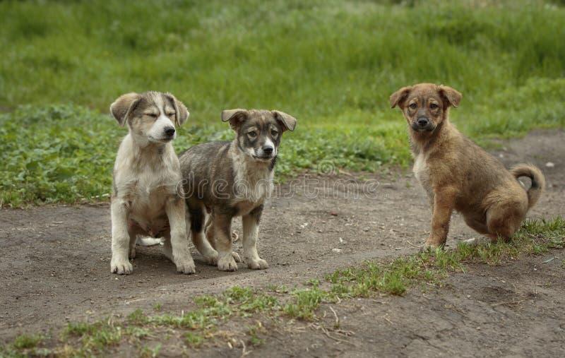 3 смешных щенят стоковое фото