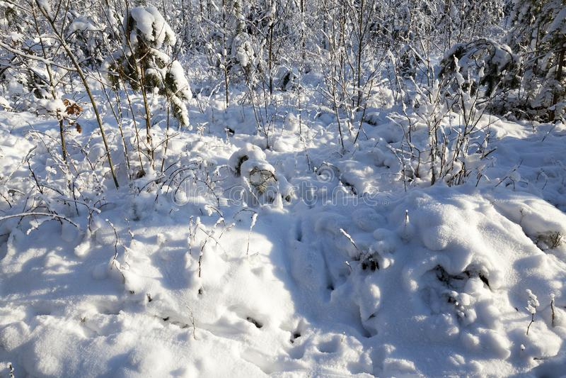 Смещения снега в зиму стоковые изображения rf