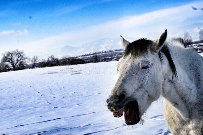 Смеясь над лошадь стоковые изображения rf